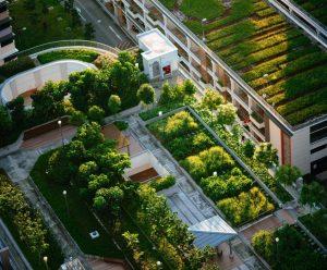Lo que debes tomar en cuenta antes de montar un roof garden