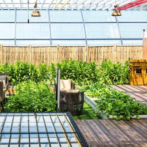 ¿Cómo mantener en buen estado las áreas verdes en interiores?