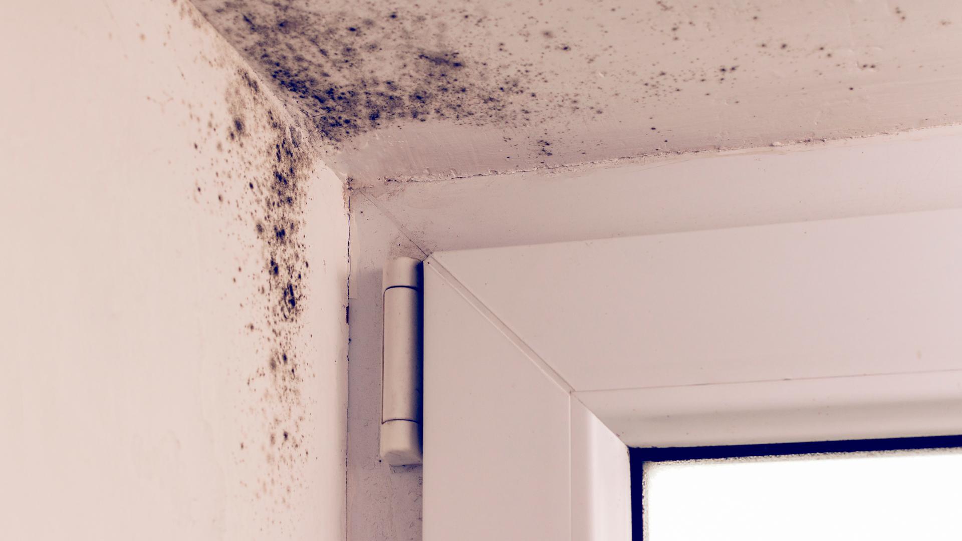 ¿Qué es la humedad por condensación y por qué se genera?
